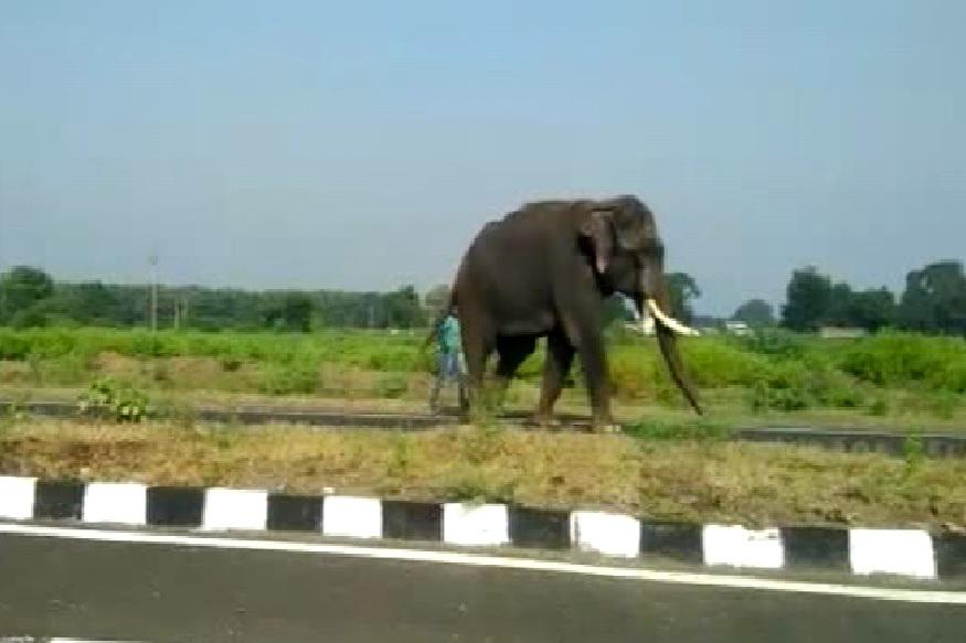 वाघिणीला जेरबंद करण्यासाठी आणलेल्या चार हत्तींना परत पाठवणार