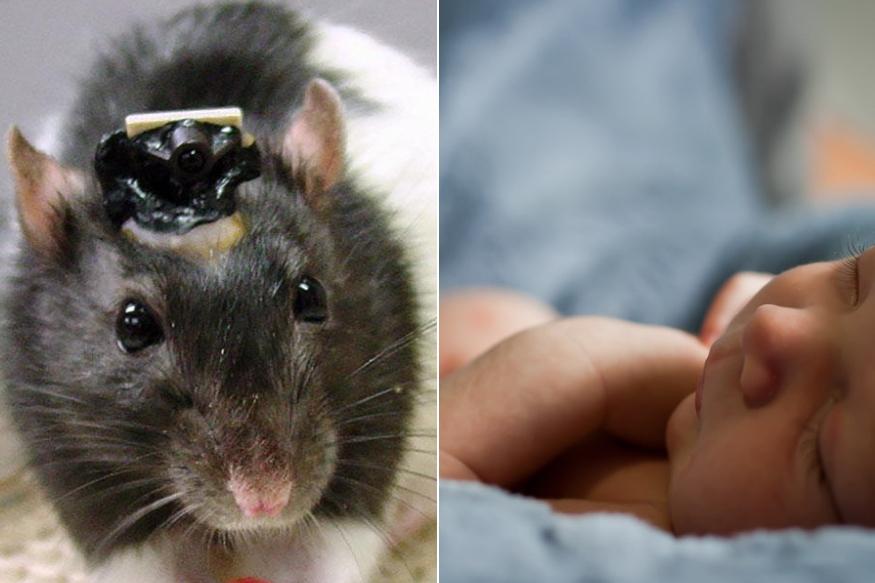 रुग्णालयात उंदरानं कुरतडल्यामुळे नवजात बाळाचा दुर्दैवी मृत्यू!