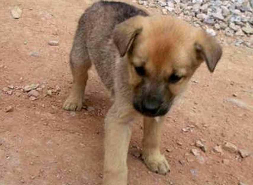 कचराकुंडीत झोपलेल्या कुत्र्यांच्या पिल्लांना जिवंत जाळलं, तिघांचा मृत्यू