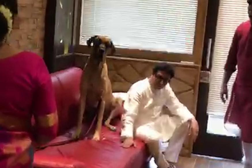 ...म्हणून राज ठाकरे 'रॅम्बो'ला भेटले, तुम्ही ऐकाल तर मन हेलावून जाईल!