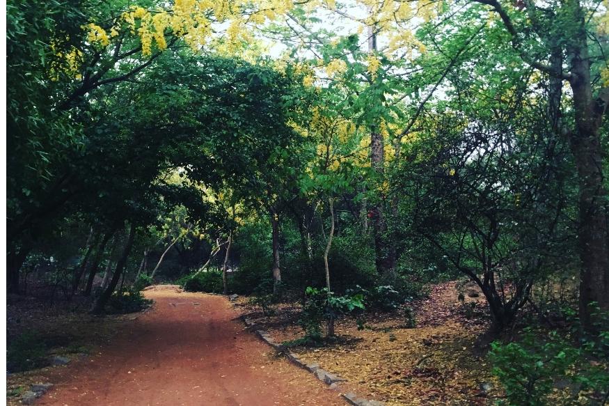 दिल्लीमध्येही अशी एक जागा आहे जिथे पर्यटकांना जाण्यास मज्जाव केला जातो. वसंत कुंज आणि महरौलीच्या जवळ संजय वन नावाचं जंगल आहे. इथल्या स्थानिकांच्या मते या जंगलात रात्री विचित्र आवाज आणि हालचाली होत असतात.
