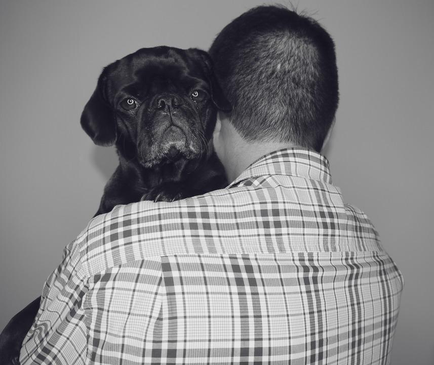 तीन पुढे लिहितेय की Cesar या नावाचा हा माणूस कफल्लक आहे. दररोजच्या जेवणासाठीही त्याला दुसऱ्यावर अवलंबून राहावं लागतं. काहीच नसलेल्या या माणसाकडे मात्र एक अनोखी संपत्ती आहे. त्याच्याकडे जीवापाड प्रेम करणारे चार कुत्रे आहेत.