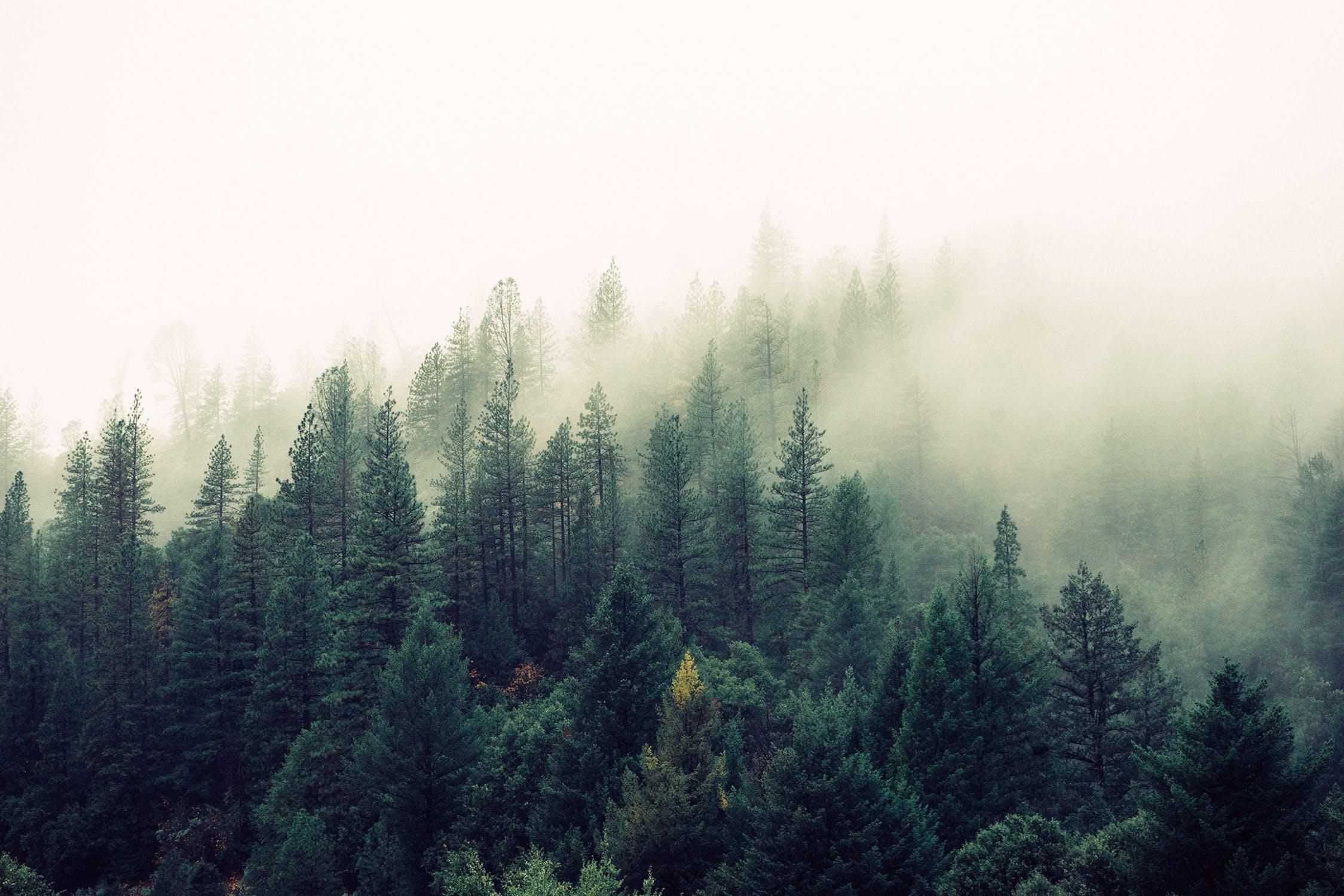 दार्जिलिंग येथील डाओ हिल नैसर्गिकरित्या अत्यंत सुंदर आहे. मात्र ही जागाही हॉंन्टेड प्लेस म्हणून ओळखली जाते.