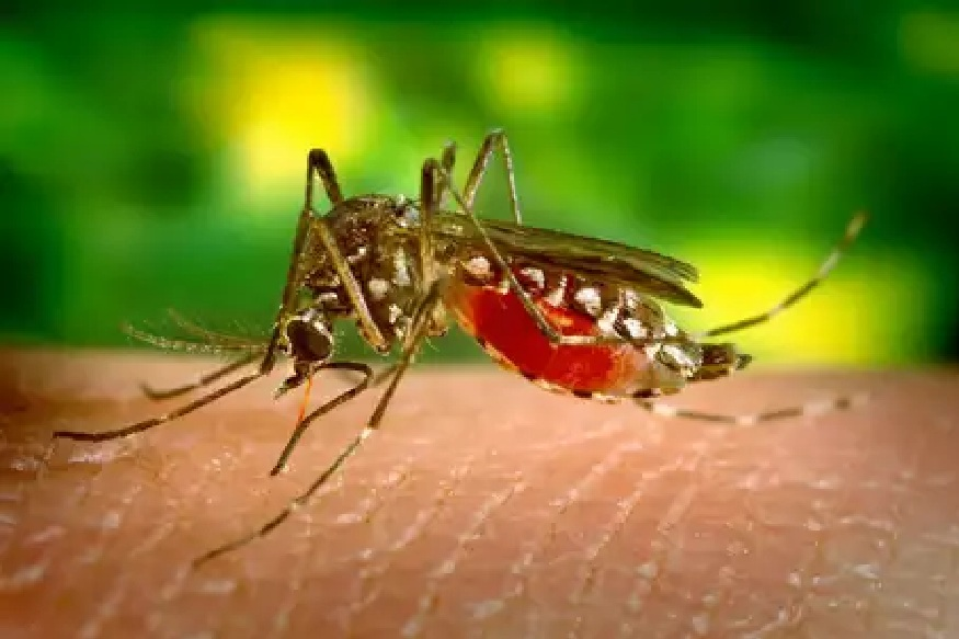 डेंग्यू, मलेरिया आणि चिकनगुनिया सारखे गंभीर आजार डासांमुळे मोठ्या प्रमाणात पसरतात. अशात डासांपासून सुटका मिळविण्साठी कॉइल, रिपेलेंट्स इ.चा वापर मोठ्या प्रमाणात केला जातो. मात्र, यातून निघणाऱ्या विषारी धुरामुळे अनेकांना श्वास घ्यायला त्रास होतो.