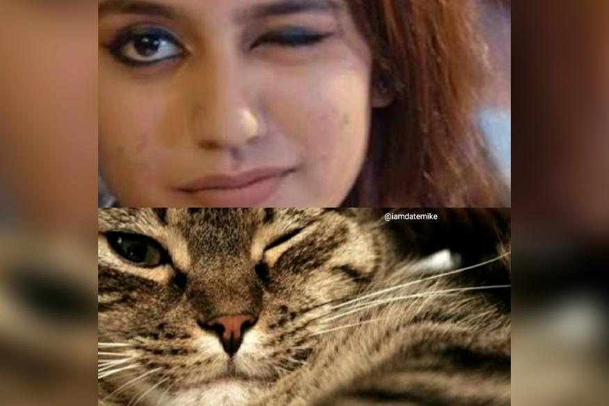 प्रिया प्रकाश वारियरचा मल्याळी चित्रपटातील एक सीन सोशल मीडियावर व्हायरल झाला होता. त्याच सीनमध्ये प्रियाने जसा डोळा मारला आहे तसाच सेम टू सेम मांजरीनं डोळा मारल्याचं या फोटोत पाहायला मिळतं आहे.