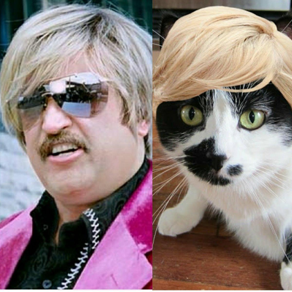चेतना रजनीकांत यांचे फॅन असावेत असा अंदाज आहे कारण रजनीकांत यांच्या केसांची स्टाईल मांजरीच्या फोटोवर एडिट केली आहे. हा मांजरीचा हटके लूक पाहा