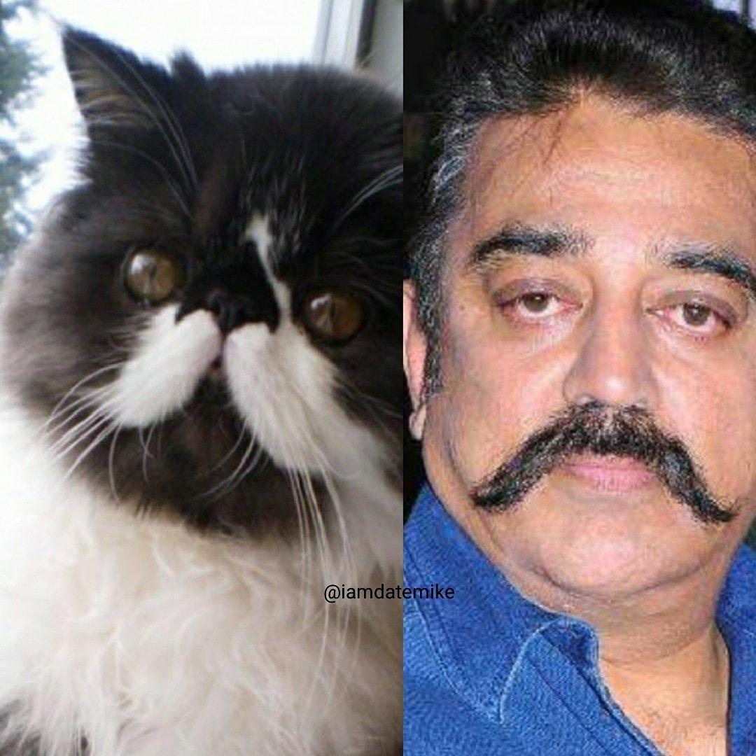 कमल हसन आणि या फोटोतील मांजरीच्या मिशा पाहा. आलं ना तुम्हालाही हसू. कुणी कुणाला कॉपी केलं आहे हे यामध्ये सांगणं कठीण आहे. मात्र दोघांच्या मिशांची स्टाईल मात्र एकसारखी आहे.