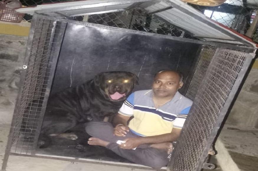 रोटविलर जातीचा हा कुत्रा आहे. जाधव यांच्याकडे असलेल्या अशाच जातीच्या दहा महिने वयाच्या कुत्र्याचा गॅस्टोच्या आजाराने मृत्यू झाला.