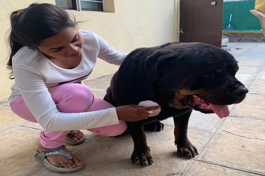 जाधव यांच्या मुलींना त्या कुत्र्याचा खूप लळा होता. म्हणून त्यांनी तसाच नवीन कुत्रा घरी आणला. त्याचं नावसुध्दा ब्रूनो ठेवले. पण दुर्दैवाने नवीन आणलेल्या कुत्र्यालासुध्दा गॅस्ट्रो झाला.