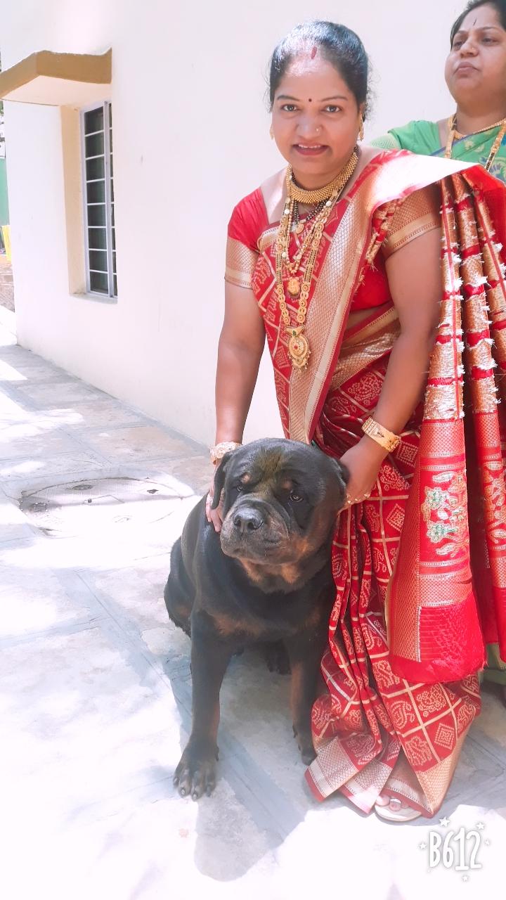 धनकवडीमधील राजमुद्रा सोसायटीमध्ये राहणारे नाना जाधव यांनी जागरण गोंधळाचा कार्यक्रम ठेवला होता. भोर तालुक्यातील आपल्या जांभळी गावी पाळीव कुत्र्यासाठी त्यांनी हा कार्यक्रम ठेवला होता.