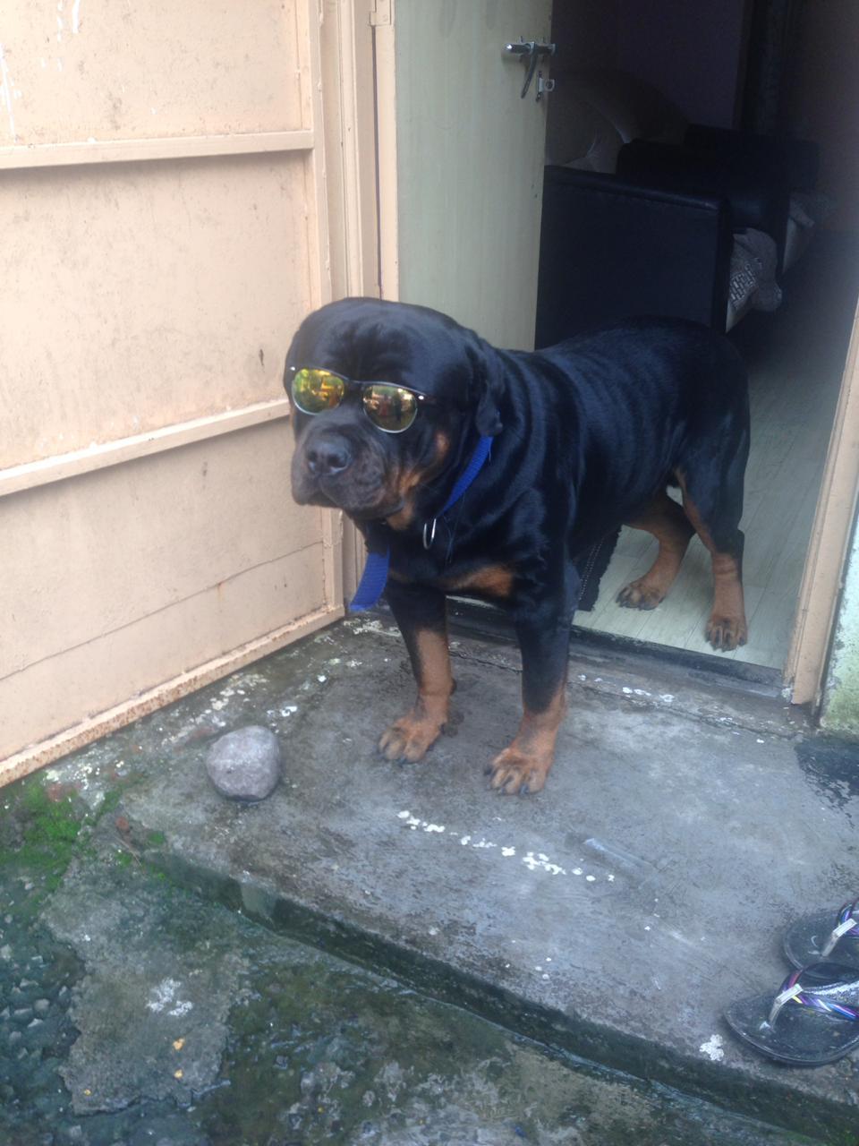 जाधव कुटुंबातील या कुत्र्याचे नाव ब्रुनो असून त्याचं वय 2 वर्षे आहे.
