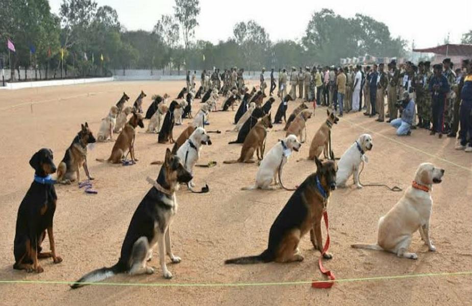 सीमेवरच्या तैनातीसाठी या कुत्र्यांना प्रशिक्षण दिलं जात आहे.