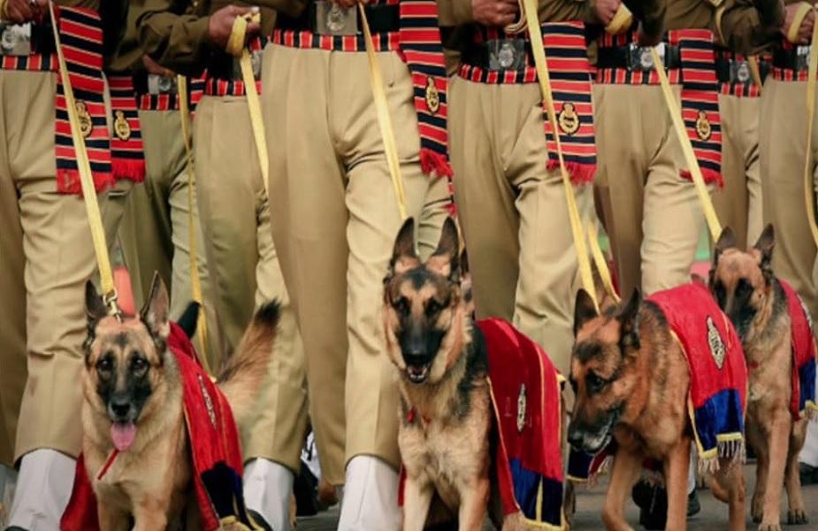 सीमा सुरक्षा दलाच्या प्रत्येक तुकडीसोबत 4 कुत्रे तैनात असतील.