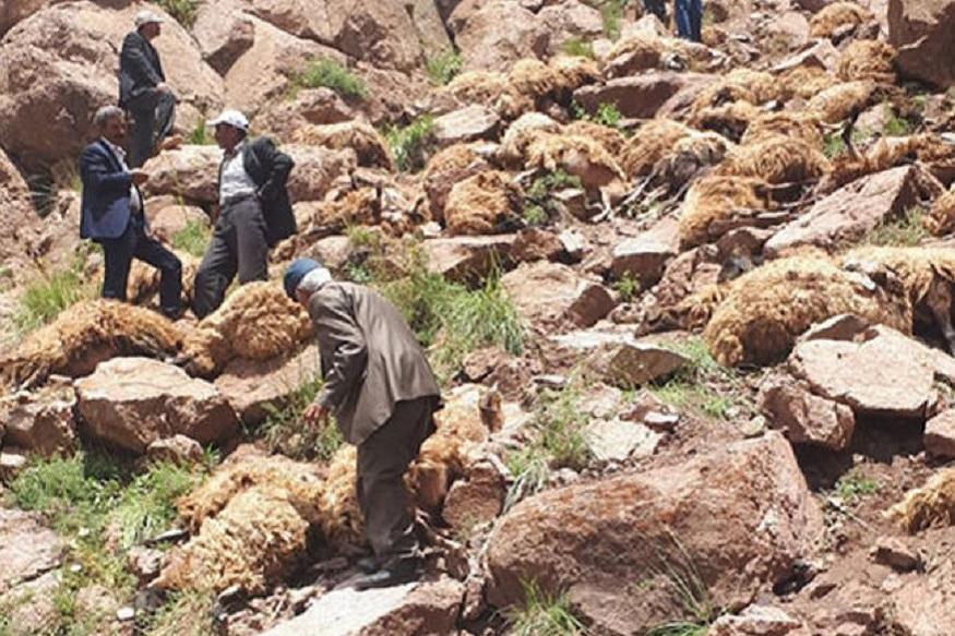 तुर्कीमध्ये 1500 मेंढ्यांनी डोंगरकड्यावरून उड्या घेऊन आत्महत्या केली होती. या मेंढ्यांना चरायला सोडलं होतं पण त्यांनी एकत्र आत्महत्या केली.