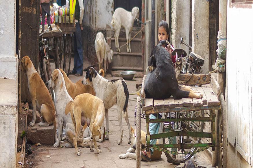 शहरांतल्या अनेक भागांमध्ये कुत्र्यांची संख्या कमी झाल्याचं अनेकदा दिसून आलंय. भटक्या कुत्र्यांची संख्या वाढल्याने लोकांच्याही तक्रारी असतात. त्यातूनच त्यांना कुत्र्यांना हटविण्याची मागणी केली जाते.