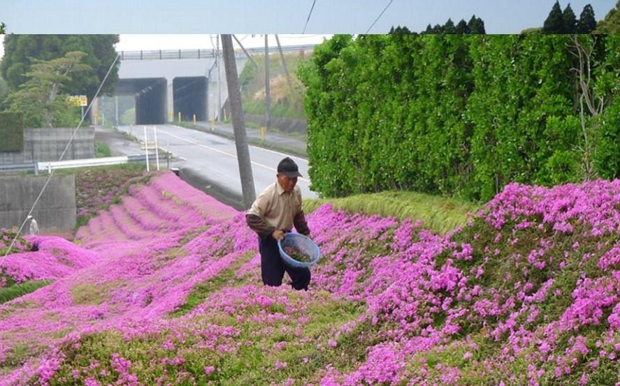 एका व्यक्तिने आपल्या अंध पत्नीच्या प्रेमासाठी चक्क गुलाबाची बागच उभी केली. ही संपूर्ण बाग तयार करण्यासाठी त्याला दोन वर्ष लागले. (छाया सौजन्य- यूट्यूब)