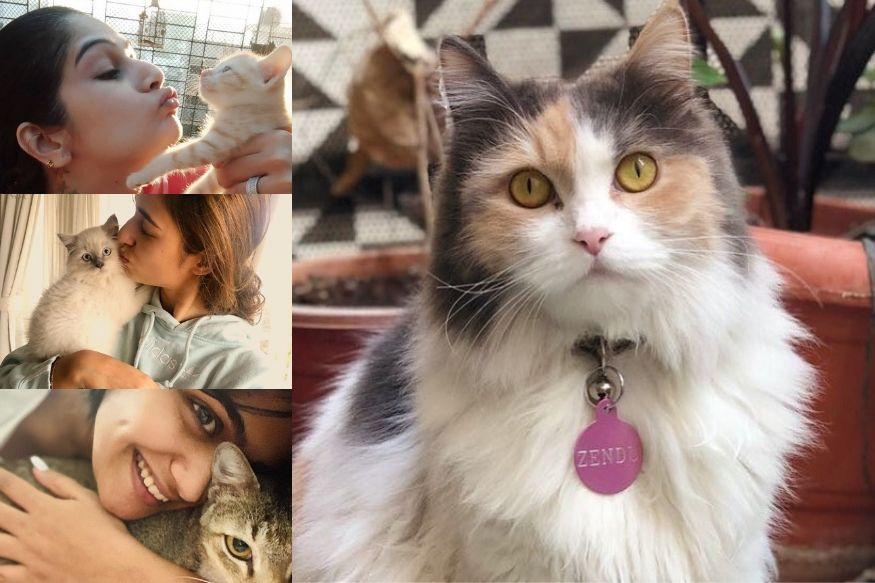 बॉलिवूडमध्ये आणि मराठीतही अनेक अभिनेत्री मार्जारप्रेमी आहेत. त्यांच्याकडे त्यांच्या मांजरींच्या एकाहून एक सुरस कथाही आहेत.