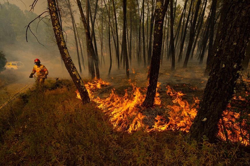 पृथ्वीची फुप्फुसं असं याचं वर्णन केलं जातं. कारण सृष्टीला 20 टक्के ऑक्सिजनचा पुरवठा या जंगलामुळे होतो आणि प्राणवायूचा साठाच आता जळतो आहे.