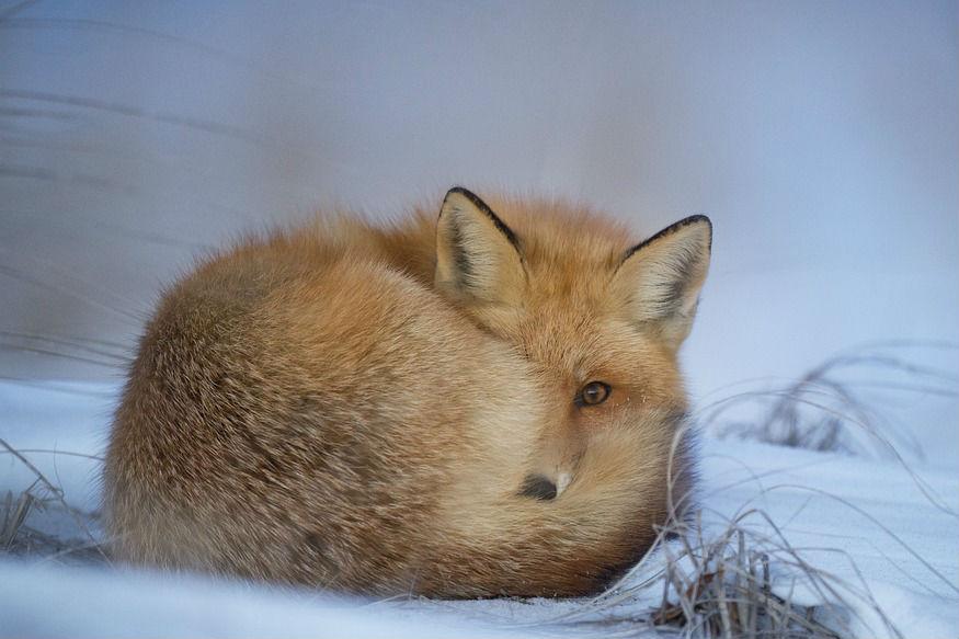 थंडीच्या दिवसांमध्ये स्वतःचं रक्षण करण्यासाठी आपण एक ना अनेक मार्ग अवलंबतो. यात आहारापासून कपड्यांपर्यंतच्या अनेक गोष्टींचा समावेश असतो. आपण अनेक प्रकारे स्वतःचं थंडीपासून रक्षण करतो, पण प्राणी थंडीपासून त्यांचं संरक्षण कसं करत असतील याचा कधी विचार केला आहे का? कोणत्या प्राण्यांना सर्वात जास्त थंडी वाजते ते जाणून घेऊ.. (सर्व छायाचित्र- सांकेतिक)