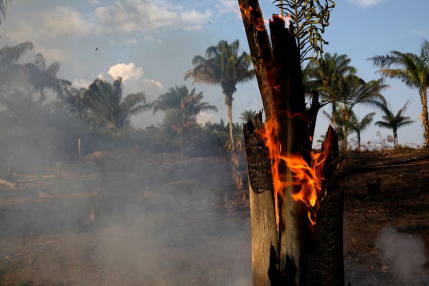 Amazon अमेझॉनचं हे रेनफॉरेस्ट म्हणजे जगातलं सर्वांधिक जैववैविध्य Biodiversity असलेलं ठिकाण आहे.