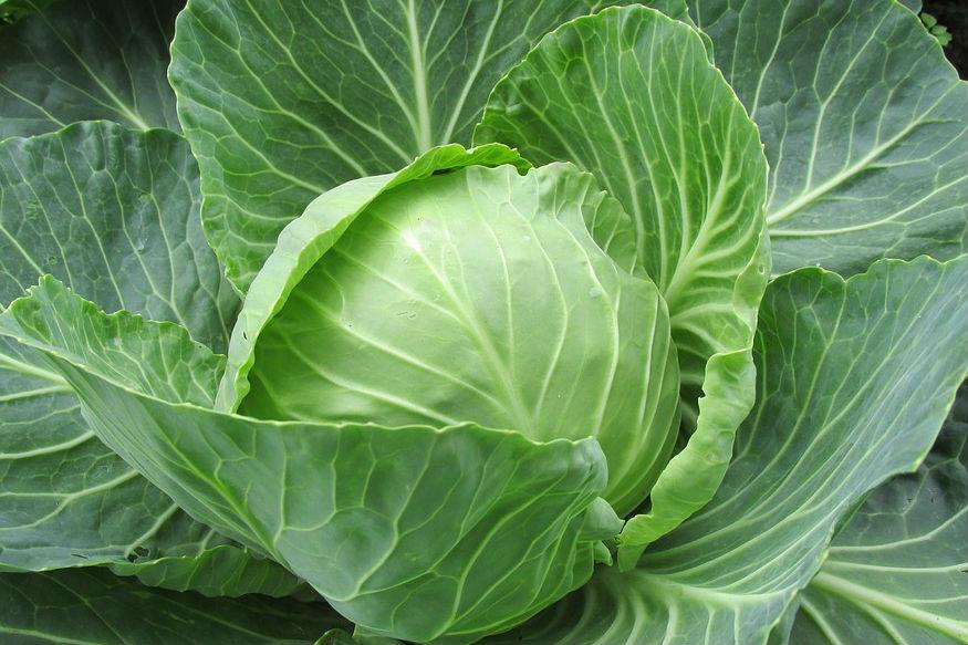 फ्लॅावर- पावसाळ्यात बटाटे, फ्लॅावर या भाज्यांकडे दुर्लक्ष करायला हवं. कारण या भाज्या पचनासाठी जरा जड असतात. जर या भाज्या पचल्या नाहीत तर पोटात जंतूसंसर्ग होण्याची शक्यता असते.