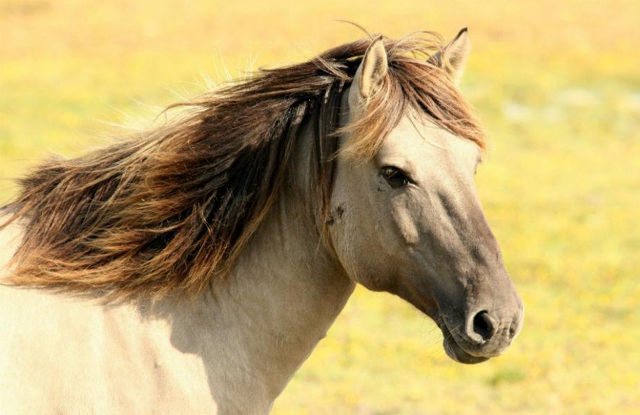 फेंगशुईमध्ये घोड्याला प्रगतीचं दुसरं रूप मानलं जातं. जर तुम्हाला नोकरी किंवा व्यवसायात यश हवं असेल तर घरात एक धावणाऱ्या घोड्याची फोटो फ्रेम लावा.