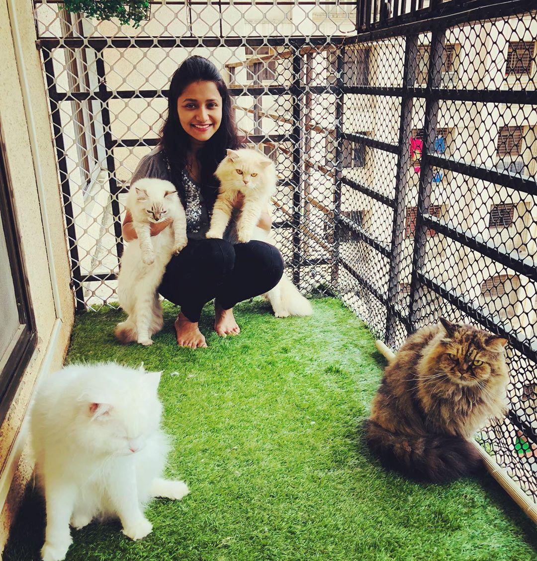 बिग बॉसनंतर सध्या वर्तुळ मालिकेमुळे चर्चेत असणाऱ्या जुई गडकरीकडे चार मांजरं आहेत. (फोटो - Instagram)