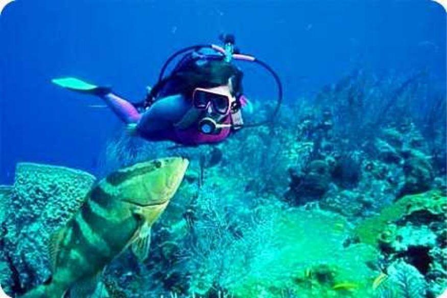 समुद्रात व्हेल, शार्क, कोबिया, स्टिंग रे, स्टोनफिश अशा विविध स्वरुपाच्या मासे आणि अन्य जीव असतात. कर्नाटकपासून अवघ्या काही किलोमीटरच्या अंतरावर हे बेट आहे.