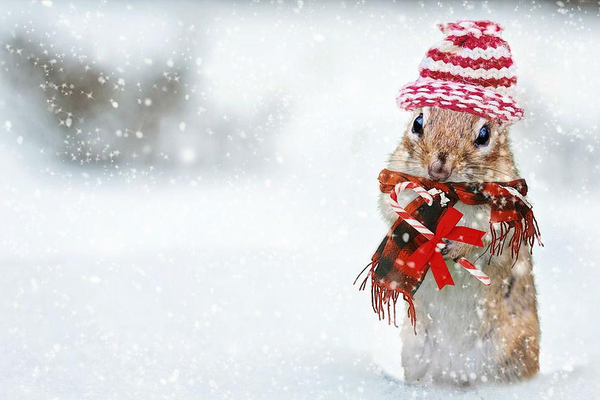 'या' प्राण्यांना लागते सर्वात जास्त थंडी, तुमच्याकडे आहे का यातला कोणता प्राणी?
