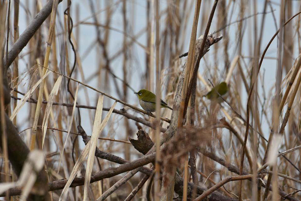 chickadees नावाचा पक्षी थंडीत स्वतः भोवती गरमीचा मोठा थर निर्माण करतो. थंडीच्या काळात हा पक्षी एरव्हीपेक्षा जास्त खातो. (सर्व छायाचित्र- सांकेतिक)