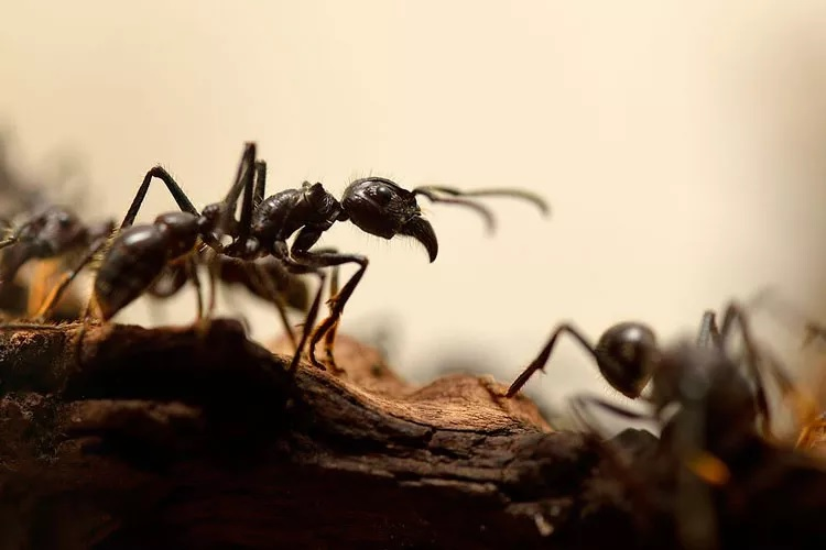 जर मुंगी किंवा मधमाशी चावली तर जवळपास मिंटसदृश गोष्ट असेल तर ती चावलेल्या भागावर लावा. विक्स किंवा कांद्याचा रस चावलेल्या भागावर लावल्यावरही फार आराम मिळतो.