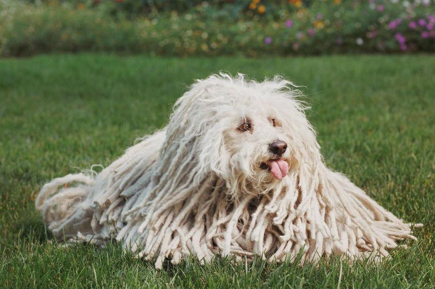 बीस्टला सोशल मीडियावर आतापर्यंत प्रचंड फुटेज मिळालं आहे. यामुळे सेलिब्रिटी कुत्र्यांमध्ये त्याची गणना होत आहे. म्हणूनच आज आपण मार्क झुकरबर्गच्या कुत्र्यांचे अर्थात बीस्टचे काही व्हायरल फोटो पाहू.