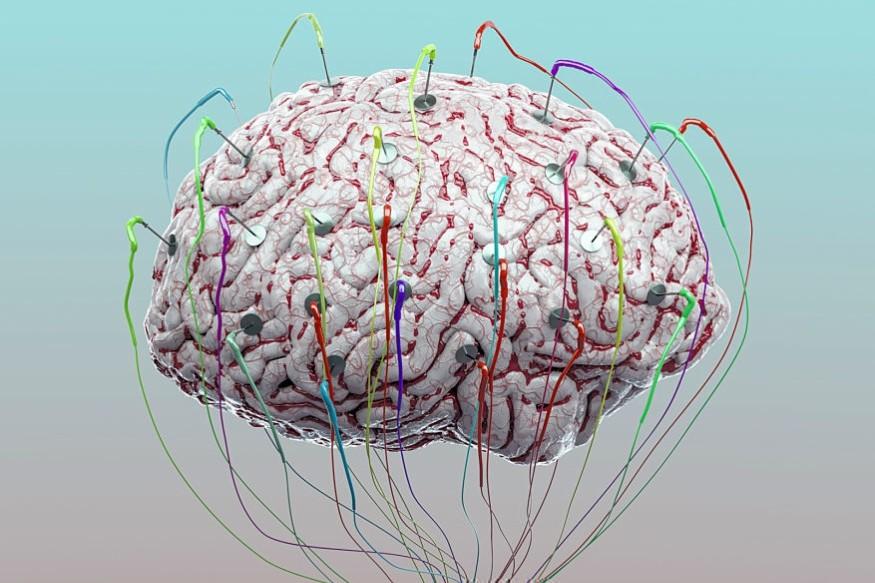 मेंदूचा प्रत्येक भाग हा वेगवेगळी कामं करतो असंही काहींना वाटतं. मात्र मेंदू हा लवचिक असतो. त्यामुळे कोणतंही काम करण्यात मेंदू सक्षम असतो.