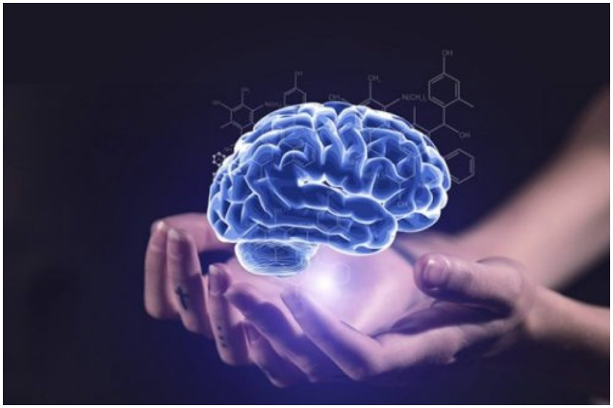 शिस्तबद्ध लोकांचा डाव्या बाजूचा मेंदू तर सर्जनशील लोकांचा उजव्या बाजूचा मेंदू जास्त कार्यशील असतो असं म्हटलं जातं. पण हे पूर्ण असत्य आहे. मेंदूचे दोन्ही भाग हे समसमान काम करत असतात.