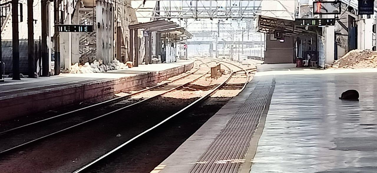 सर्वच उपनगरी रेल्वेच्या स्टेशन्सवर असा शुकशुकाट दिसतो आहे.