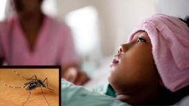 अमरावती शहरात डेंग्यूचा कहर; 24 तासात तीन महिलांचा मृत्यू!