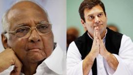 महाघाडीची शक्यता नाही, राहुल गांधींचं नेतृत्व मान्य नसल्याचे पवारांचे स्पष्ट संकेत