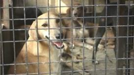 OMG कुत्रा चावल्यानं मालकाला सहा हजाराचा दंड!