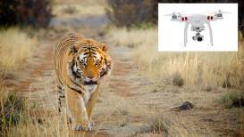 भद्रावतीत दिसलेल्या वाघाचा वनविभागाला थांगपत्ता लागेना