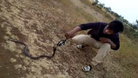 VIDEO : विषारी सापासोबत युवकाची स्टंटबाजी; व्हिडीओ व्हायरल