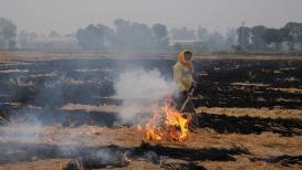 धक्कादायक, मराठवाड्यात 11 महिन्यांत 781 शेतकऱ्यांच्या आत्महत्या