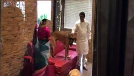 VIDEO : 'जेम्स'च्या पिल्लाला भेटून राज ठाकरे झाले भावूक!