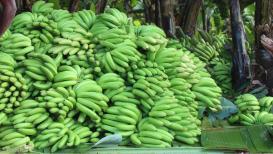 Pulwama हल्ल्याच्या निषेधार्थ केळी उत्पादक शेतकऱ्यांनी घेतला 'हा' महत्त्वपूर्ण निर्णय