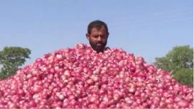 शेतकऱ्याने स्वत:ला कांद्यातच गाडून घेतलं, बळीराजाची हतबलता दाखवणारा VIDEO