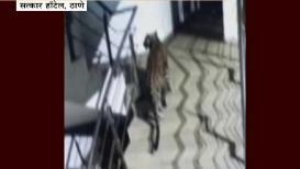 VIDEO: ठाण्यात मॉलमधून हॉटेलमध्ये शिरला बिबट्या, समोरच आहे शाळा