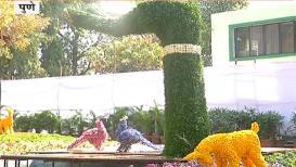 Special Report: अबब! पुण्याच्या थीम पार्कमध्ये 14 लाखाचं झाड