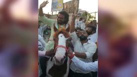 VIDEO: प्रचारासाठी अमोल कोल्हे घोड्यावर स्वार, चाहत्यांनी सेल्फीसाठी गेली गर्दी