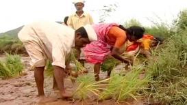 बजेटमध्ये शेतकऱ्यांना मिळू शकते जास्त मदत, SBIनं दिला रिपोर्ट