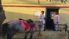 अखेरच्या क्षणाला घोड्यावर रपेट करत थेट मतदान केंद्रावर पोहोचला शेतकरी