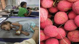125 मुलांचा जीव खरंच लिची खाल्ल्याने गेला का? हे फळ खाताना घ्या 'ही' काळजी
